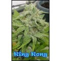 King Kong (Dr. Underground)