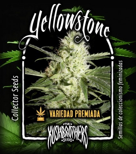 Yellowstone (KushBrothers)