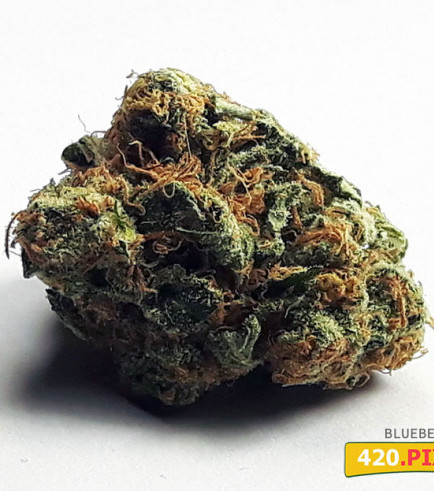 Blueberry (420.pixels)